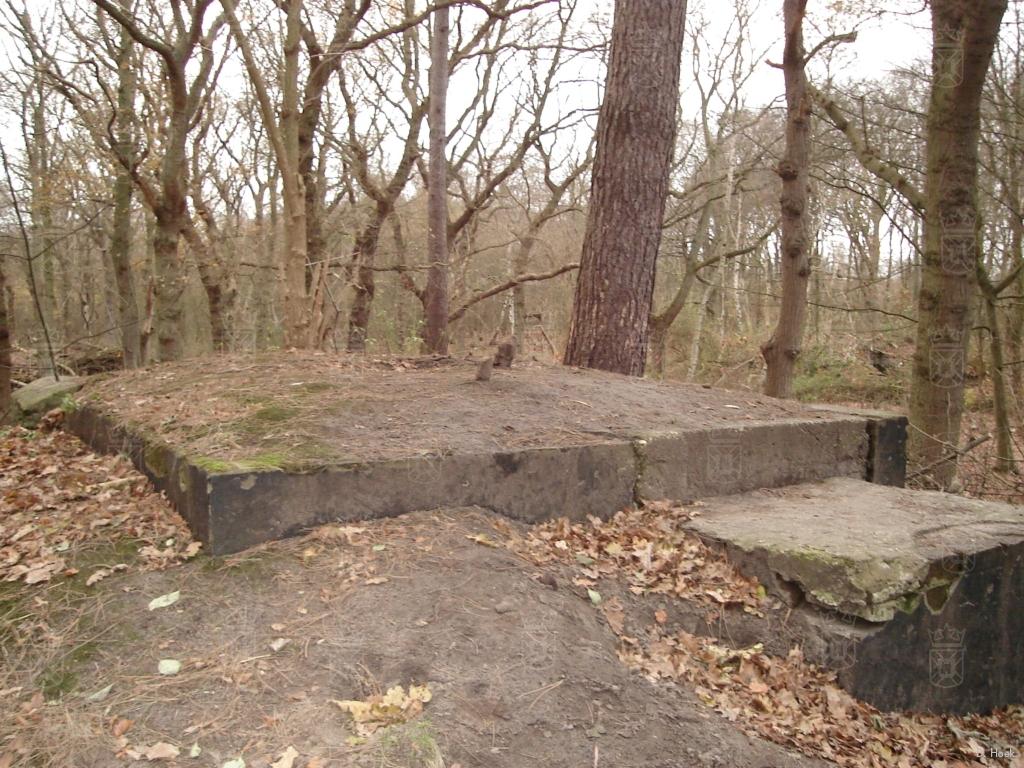 Een van de bunkers op Nieuw Leeuwenhorst, nu ingericht als vleermuisbunker.