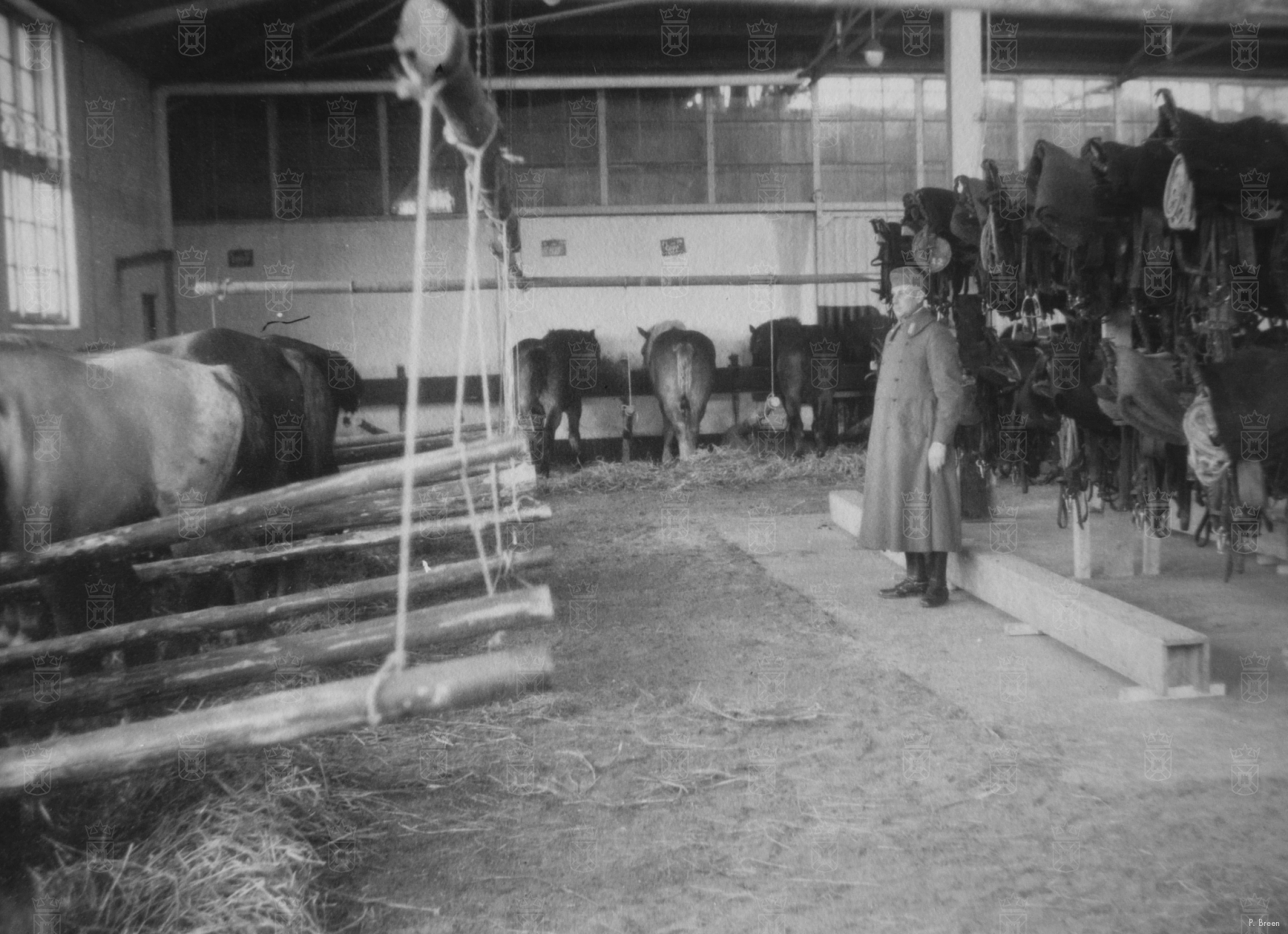 Paarden van de Bereden Artillerie tijdens de mobilisatiedagen.